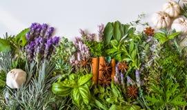 Взгляд сверху красивых органических свежих трав от сада и специй на белой предпосылке стоковые фото