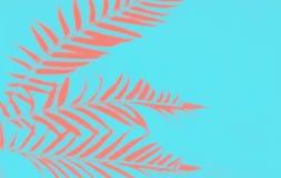 Взгляд сверху ладони коралла тропической выходит тень на голубую предпосылку стоковые изображения