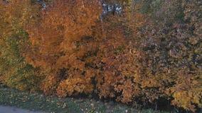 Взгляд сверху ландшафта центральной России с деревьями которые покрыты с листвой осени видеоматериал