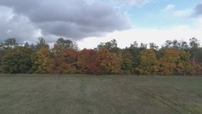 Взгляд сверху ландшафта центральной России с деревьями которые покрыты с листвой осени сток-видео