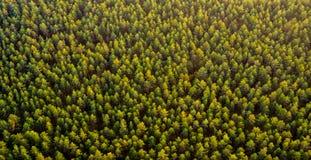 Взгляд сверху леса стоковые изображения rf