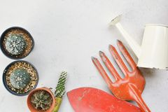Взгляд сверху меньший красивый кактус в баке Стоковое Изображение