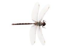 взгляд сверху мухы дракона Стоковые Изображения RF