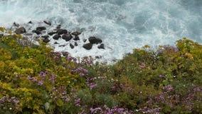 Взгляд сверху на океанских волнах разбивая на камнях и утесах Красивые цветки на переднем плане видеоматериал