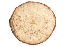 Взгляд сверху пня бука деревянного изолированного на белой предпосылке Стоковое Изображение RF