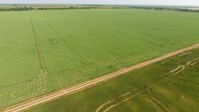 Взгляд сверху пшеничного поля Летать над пшеничным полем акции видеоматериалы
