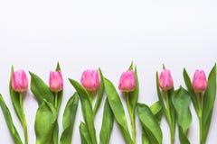 Взгляд сверху розовых тюльпанов аранжировало в линии над белой предпосылкой скопируйте космос стоковая фотография