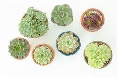Взгляд сверху суккулентных баков комнатного растения стоковые фото