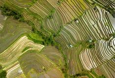 Взгляд сверху съемки ricefield Бали воздушное Стоковые Фотографии RF