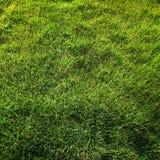 взгляд сверху травы Стоковые Изображения