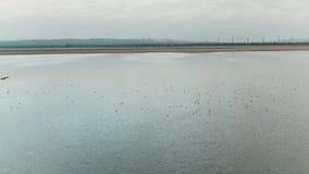 Взгляд сверху уток плавая на озеро съемка Дикое стадо уток плавает на озере в пасмурной погоде Панорамный вид уток видеоматериал