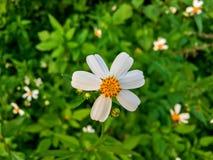 Взгляд сверху цветка травы и белого цветка в саде Стоковое Изображение