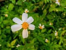 Взгляд сверху цветка травы и белого цветка в саде Стоковое Фото