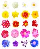 Взгляд сверху цветков изолированных на белой предпосылке Стоковая Фотография RF