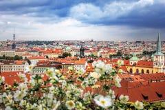 Взгляд сверху через цветки к крышам красной плитки чехии города Праги, красивого голубого неба с облаками Типичная Прага Стоковая Фотография