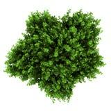взгляд сверху bush bigleaf изолированный hydrangea бесплатная иллюстрация