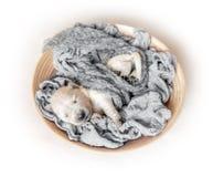 Взгляд сверху newborn спать щенка золотого retriever стоковые изображения rf