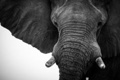 Взгляд слона стоковое изображение rf