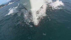 Взгляд смычка парусника на Адриатическом море в Хорватии сток-видео