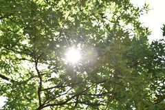 Взгляд солнца среди зеленых листьев стоковые фото