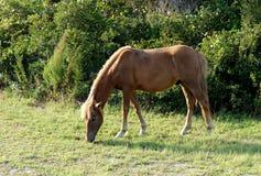 Взгляд со стороны дикой лошади Стоковая Фотография RF