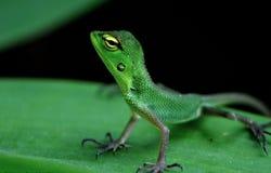 Взгляд со стороны зеленой ящерицы Стоковая Фотография