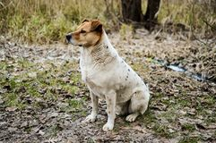 Взгляд со стороны красивой бездомной собаки сидя на том основании в осени Стоковое фото RF