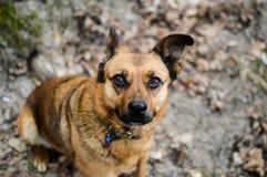 Взгляд со стороны красивой бездомной собаки сидя на том основании в осени Стоковое Изображение RF