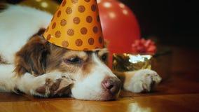 Взгляд со стороны: Портрет милой собаки дня рождения В праздничной крышке лежа вокруг подарков стоковое фото rf