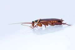 взгляд со стороны таракана Стоковая Фотография RF