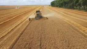 """Взгляд со стороны трактора жатки красного и голубого, производящ очищая желтый рапс на поля фермерах """" Сырцовое акции видеоматериалы"""