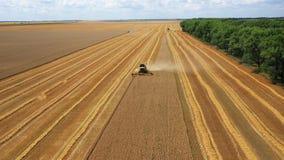 """Взгляд со стороны трактора жатки красного и голубого, производящ очищая желтый рапс на поля фермерах """" Сырцовое видеоматериал"""