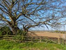 Взгляд старого дерева и деревянной загородки с вспаханными сельскохозяйственными угодьями на заднем плане стоковые фото
