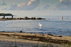 Взгляд старых столбов волнореза на пляже, Lapmezciems, залив Риги, стоковые изображения