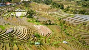 Взгляд съемки ricefield Бали воздушный Стоковая Фотография RF