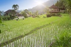 Взгляд террас и гор риса bali Индонесия стоковое фото