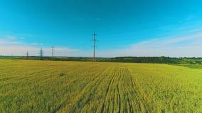 Взгляд трутня области сельской местности среди золотых зрелых пшеничных полей и сельских домов на пасмурный летний день