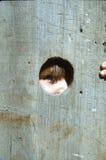 взгляд украдкой boo Стоковое Изображение