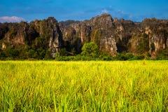 Взгляд фермы сахарного тростника на Phitsanulok, Таиланде стоковые фотографии rf