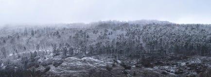 Взгляд холма леса в зиме Стоковая Фотография
