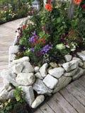 Взгляд цветков в цветени Стоковые Фото