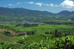 взгляд чая плантации озера cileunca 3 Стоковые Фотографии RF