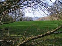 Взгляд через ветви дерева Стоковые Фотографии RF
