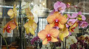 Взгляд через окно магазина на орхидеях стоковые изображения