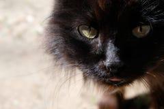 Взгляд черного пушистого кота улицы Портрет дикого животного Стоковые Фотографии RF