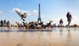 Взгляд Эйфелева башни от Trocadero стоковые изображения