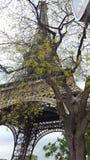Взгляд Эйфелевы башни стоковые изображения
