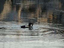 Взгляд beatifull когда птица примет некоторую еду к ее птенецам здесь в Финляндии стоковые фотографии rf