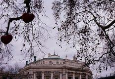 Взгляд Burgtheater через деревья украшенные для рождества стоковая фотография