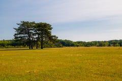 Взгляд dendrological сада в запасе Askania-Новы, Украине Стоковое Изображение